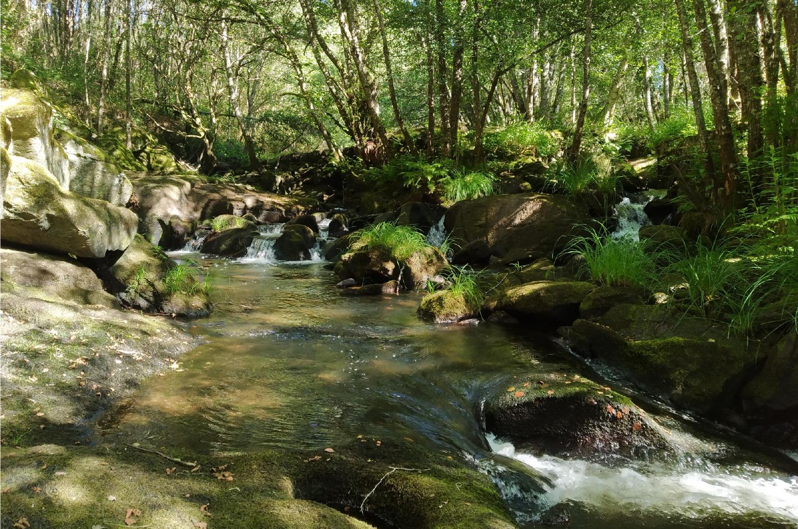 Roca Entorno Natural